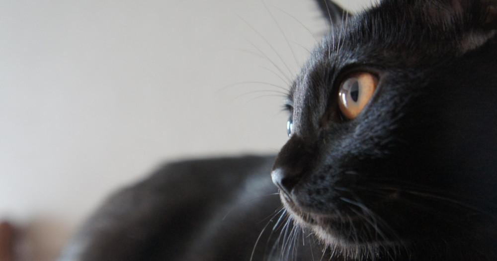 黒猫の物語「ルドルフとイッパイアッテナシリーズ」とは?