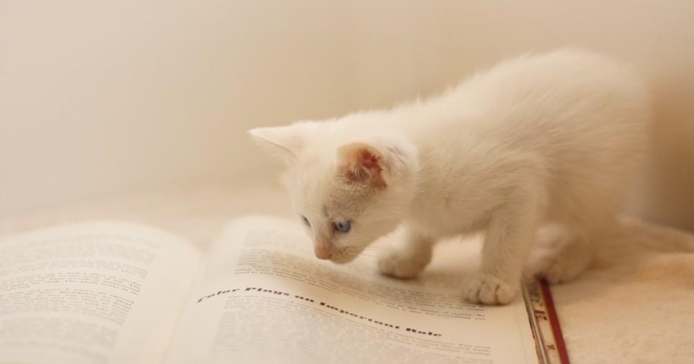 読書が苦手な人が、読書好きになるコツ