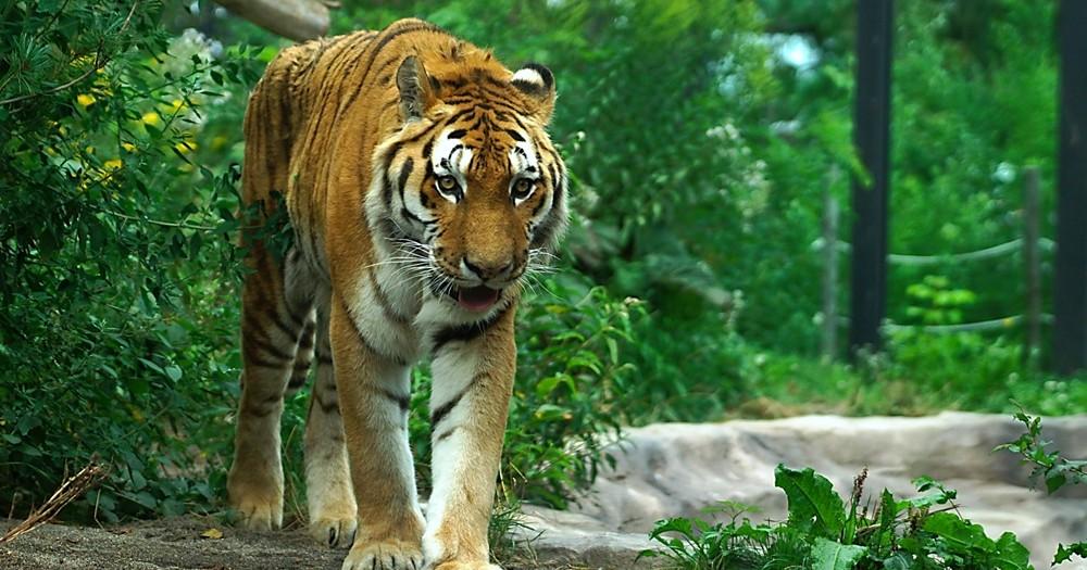 中島敦『山月記』こじらせた男が虎になって吠えるお話