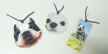 犬の写真のしおり3つ