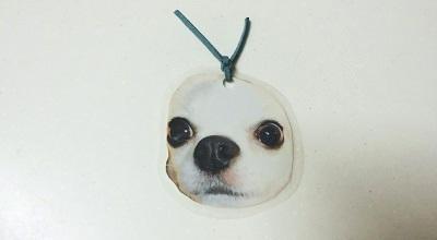 犬の写真のしおり